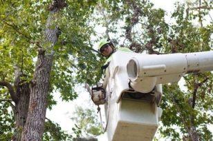 bucket-truck-tree-removal Ann Arbor, MI
