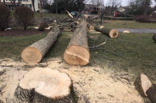 cut trees Ann Arbor, MI
